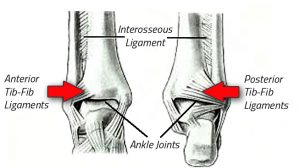 high ankle bone & ligament photo